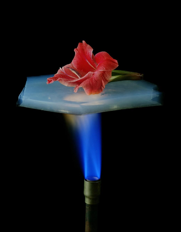MW-DN623_flower_20150608154703_NS